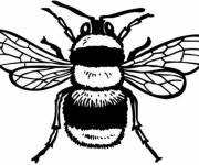 Coloring pages Bee striped in black and yellow