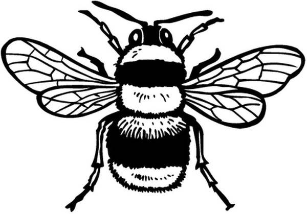 Free coloring and drawings Bee striped in black and yellow Coloring page