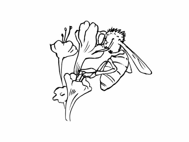 Free coloring and drawings Maternal bee Coloring page