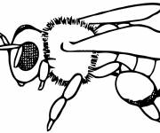 Coloring pages Sitting bee