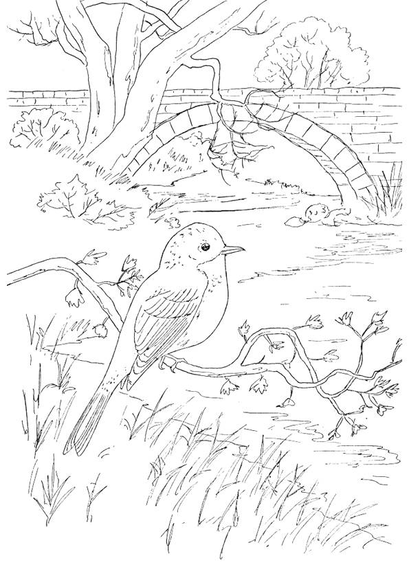 Free coloring and drawings A beautiful landscape of maternal countryside Coloring page