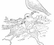 Free coloring and drawings Pencil campaign Coloring page