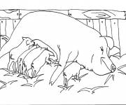 Coloring pages Pig in the countryside