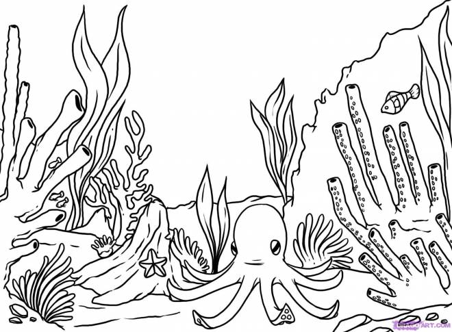 Free coloring and drawings Colored coral Coloring page