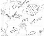 Coloring pages Coral and maritime life