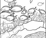 Free coloring and drawings Coral in the Sea Coloring page