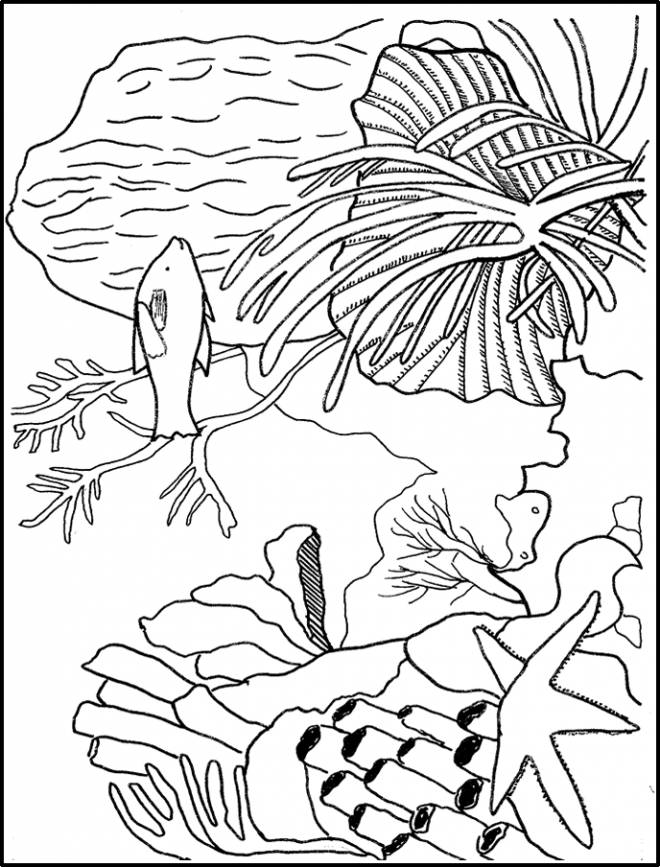 Free coloring and drawings Coral marine plant Coloring page