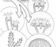 Coloring pages Coral structure