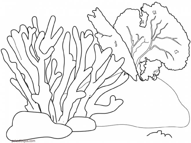 Free coloring and drawings Coral to cut Coloring page