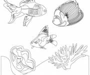 Coloring pages Corals and exotic fish