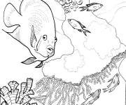 Coloring pages Corals and Maternal Fish