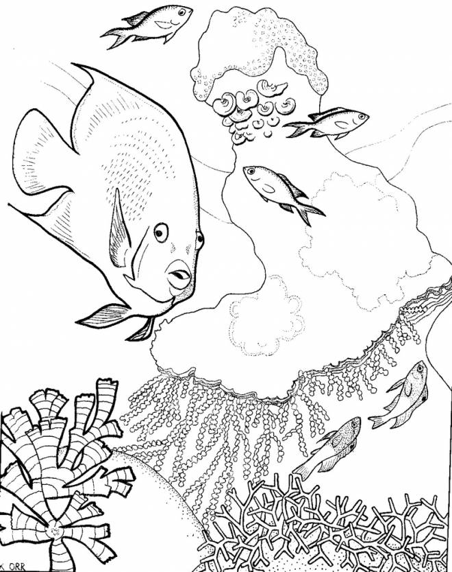 Free coloring and drawings Corals and Maternal Fish Coloring page
