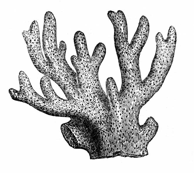 Free coloring and drawings Realistic coral Coloring page