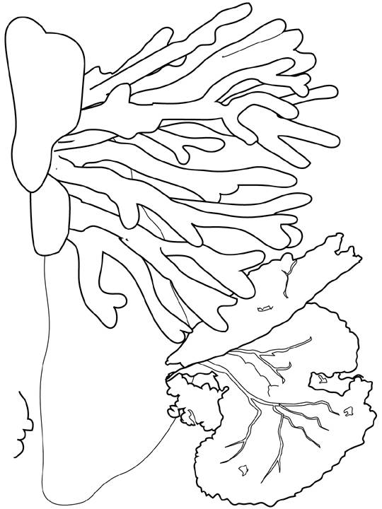 Free coloring and drawings Red coral Coloring page