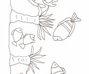 Free coloring and drawings Single coral Coloring page