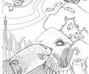 Coloring pages The diver and the Corals