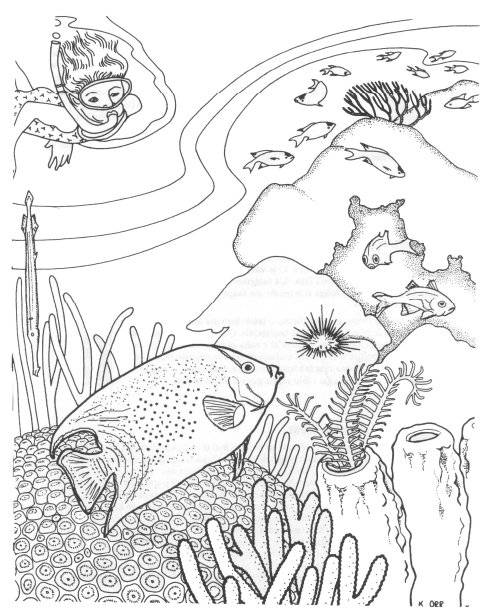 Free coloring and drawings The diver and the Corals Coloring page