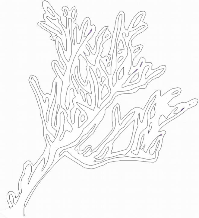 Free coloring and drawings Vector coral Coloring page