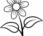 Coloring pages Flower daisy