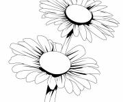 Coloring pages Vector daisy