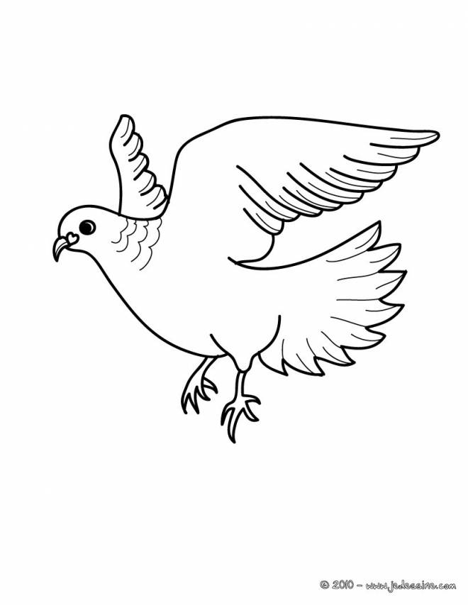 Free coloring and drawings Beautiful dove in flight Coloring page