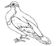 Coloring pages Canadian dove