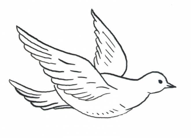 Free coloring and drawings Dove in flight Coloring page