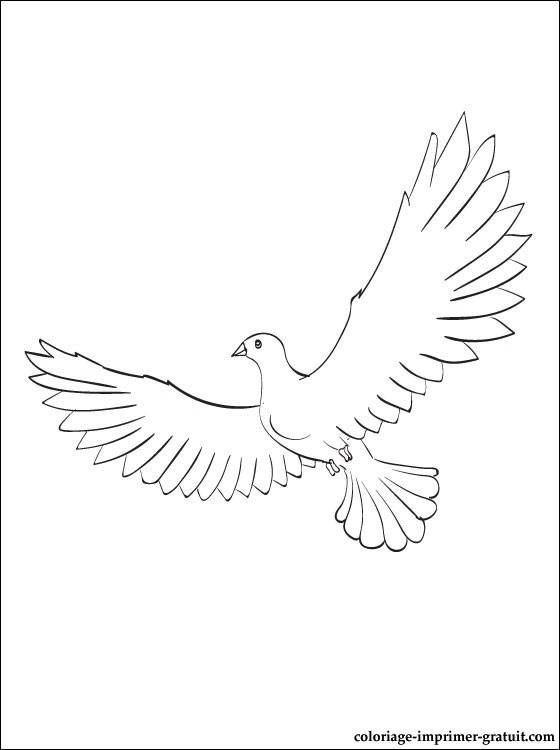 Free coloring and drawings Dove opens its wings Coloring page
