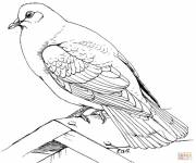 Coloring pages Dove sitting in black pencil
