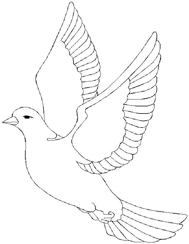 Free coloring and drawings Maternal dove Coloring page