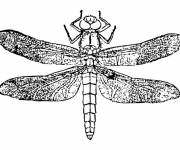 Free coloring and drawings Dragonfly 11 Coloring page