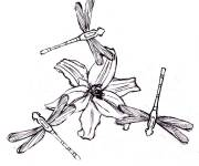 Coloring pages Dragonfly 31