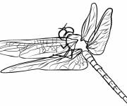 Coloring pages Dragonfly 57