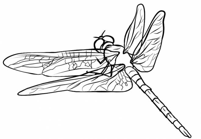 Free coloring and drawings Dragonfly 57 Coloring page