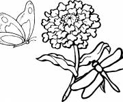 Coloring pages Dragonfly 58