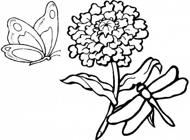 Free coloring and drawings Dragonfly 58 Coloring page