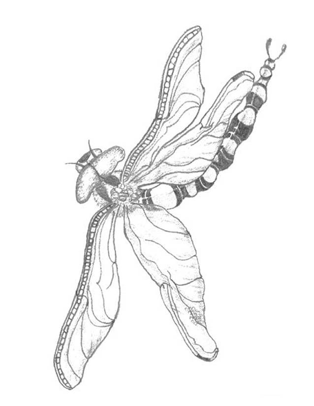 Free coloring and drawings Dragonfly 64 Coloring page