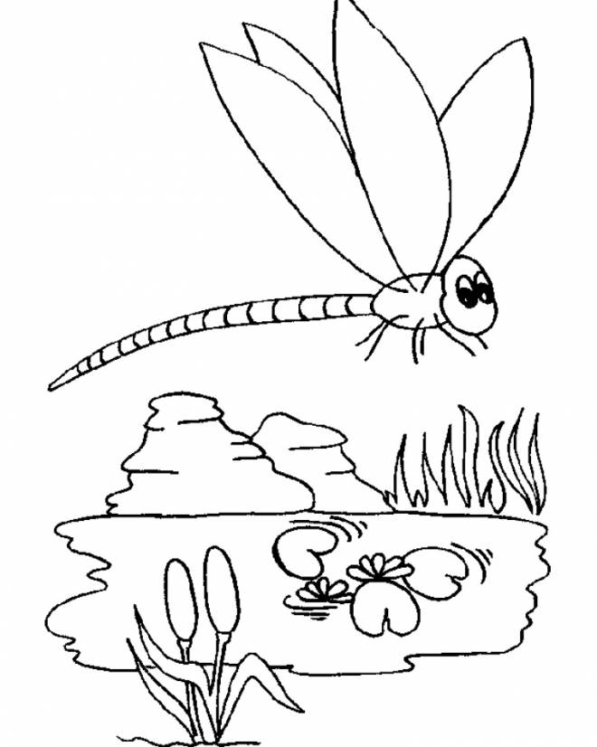 Free coloring and drawings Dragonfly 65 Coloring page