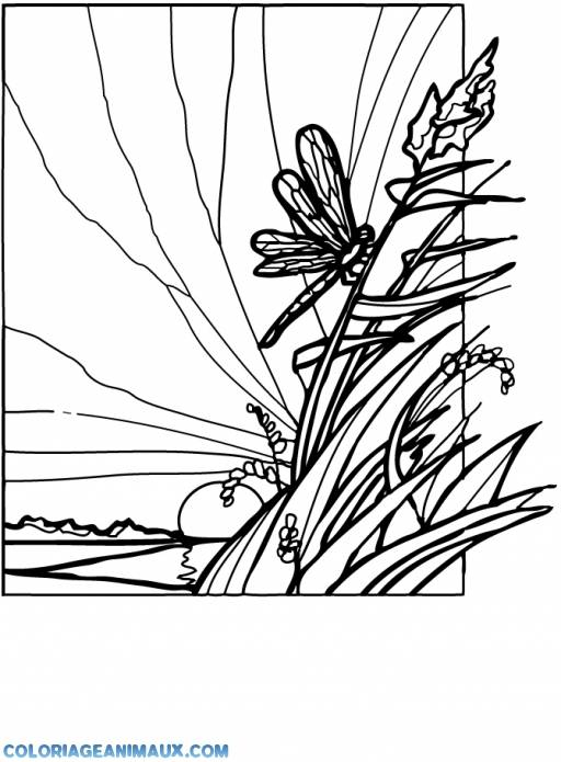 Free coloring and drawings Dragonfly 66 Coloring page