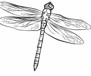 Coloring pages Dragonfly 67