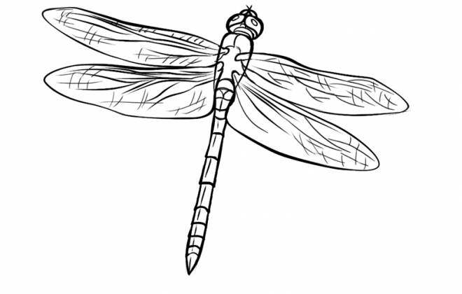 Free coloring and drawings Dragonfly 67 Coloring page