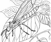 Coloring pages Dragonfly 68