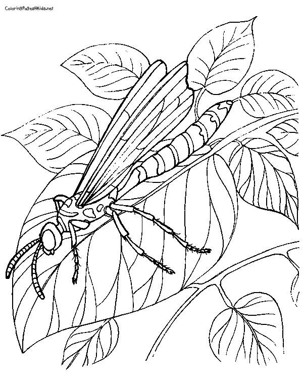 Free coloring and drawings Dragonfly 68 Coloring page