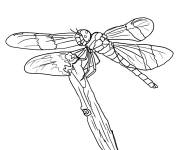 Coloring pages Dragonfly 69