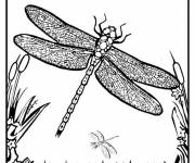 Coloring pages Dragonfly 70