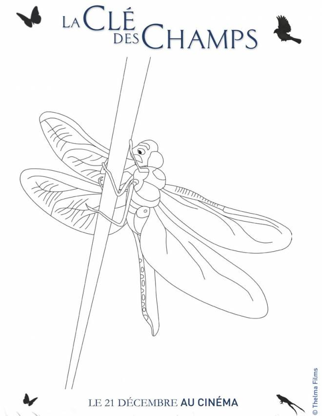 Free coloring and drawings Dragonfly 74 Coloring page