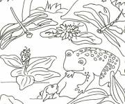 Coloring pages Dragonfly age