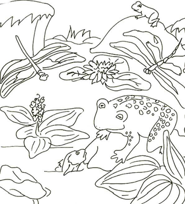 Free coloring and drawings Dragonfly age Coloring page