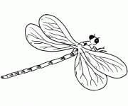Free coloring and drawings Dragonfly best off Coloring page