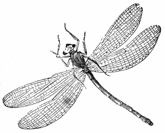 Free coloring and drawings Dragonfly cartoon to print Coloring page